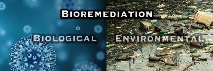Do You Know Which Type of Bioremediation You Need?